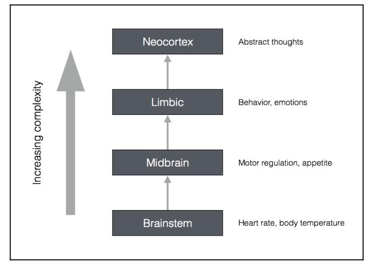 طبقات الذكاء لمخ الانسان