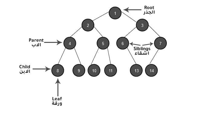 هياكل بيانات binary tree